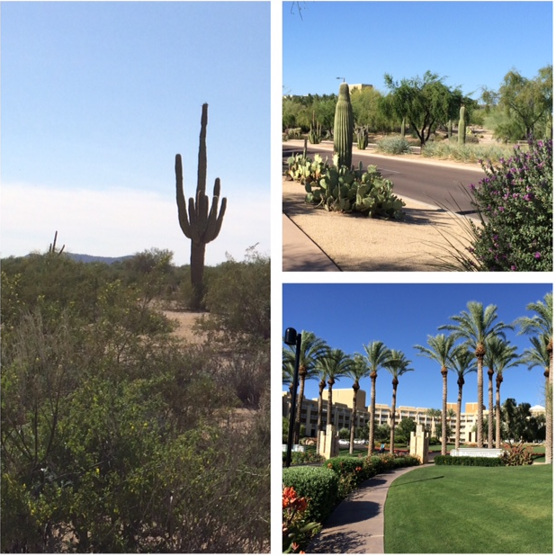 LTEN 2015 Conference Review: Bright and Sunny